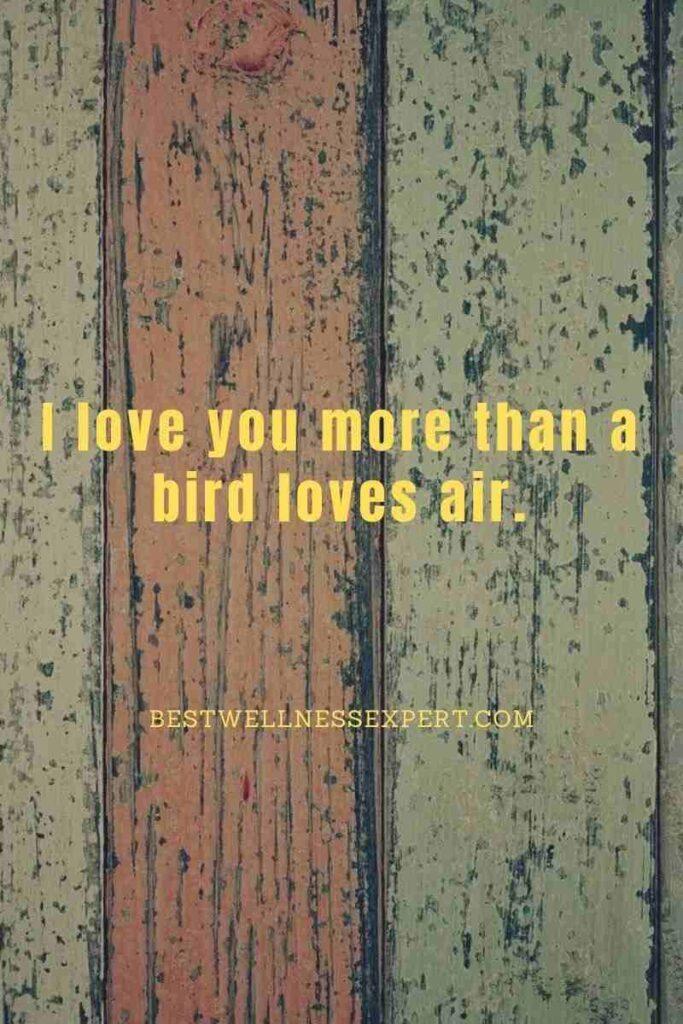 I love you more than a bird loves air.