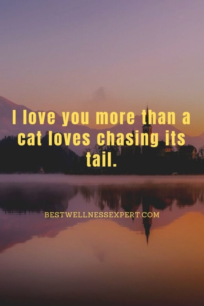 I love you more than a cat loves chasing its tail.